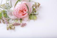 Beautiful English rose flower bouquet on white background Royalty Free Stock Image