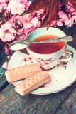Beautiful, English, vintage teacup with Japanese cherry tree blossoms,. Close up Royalty Free Stock Photos