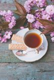 Beautiful, English, vintage teacup with Japanese cherry tree blossoms,. Close up Royalty Free Stock Images