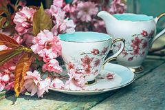 Beautiful, English, vintage teacup with Japanese cherry tree blossoms. Close up royalty free stock photography