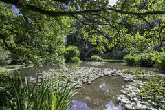 Beautiful English water garden in Summer. Stock Photos
