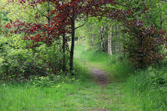 Beautiful entrance, passage in forest in spring, paradise. Beautiful entrance, passage of trees, in forest in spring. Paradise in the Netherlands stock photography