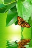 Beautiful environment Stock Image