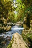 River Bussento and wwf Oasis. Beautiful environment around the river Bussento resurgence, a natural reserve   in Cilento national park Stock Images