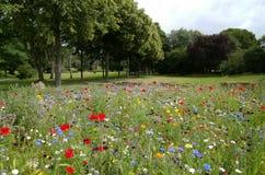 Beautiful, Environment, Field Royalty Free Stock Photos