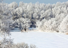 Beautiful equestrian in cold winter day Royalty Free Stock Image