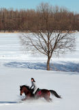 Beautiful equestrian woman in the winter woods Stock Photos