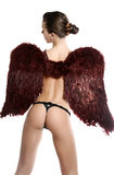 Beautiful erotic - angel Royalty Free Stock Image