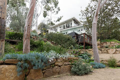 Beautiful established landscaped native garden in Australian home. Beautiful established landscaped native garden with gum trees in Australian home royalty free stock image