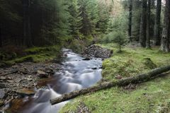 Beautiful ethereal style landscape image of small brook flwoing through pine trees in Peak District in England. Beautiful dramatic landscape image of small brook stock photography