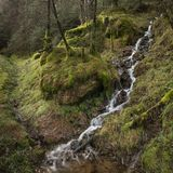 Beautiful ethereal style landscape image of small brook flwoing through pine trees in Peak District in England. Beautiful dramatic landscape image of small brook royalty free stock photos