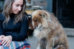 A beautiful european girl is sitting on the porch with a fluffy shepherd`s dog. Royalty Free Stock Photo