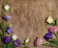 Beautiful eustoma flowers Stock Image