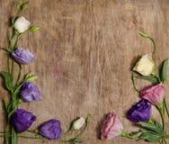 Beautiful eustoma flowers Stock Images