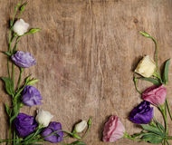 Beautiful eustoma flowers Royalty Free Stock Photos