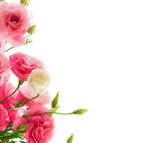 Beautiful Eustoma Flowers on the White Background Royalty Free Stock Photos
