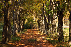 Beautiful Evening Autumn Park With Trees Stock Images