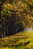 Beautiful Evening Autumn Park With Trees Stock Photography