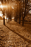 Beautiful Evening Autumn Park With Trees Stock Photo