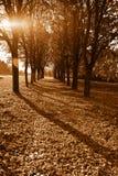 Beautiful Evening Autumn Park With Trees Stock Photo