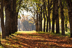 Beautiful Evening Autumn Park With Trees Royalty Free Stock Photography