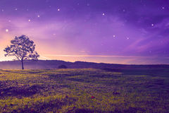 Beautiful evening  landscape Royalty Free Stock Image