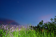 Beautiful evening meadow blue sky Stock Photo