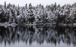 Beautiful evening next to lake at early winter Royalty Free Stock Image