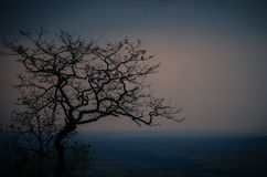 Beautiful Tree Silhouette. Colours of evening sky after summer thunderstorms in Sahyadris, Maharashtra, India Stock Image