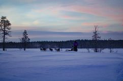 Beautiful evening sky in a husky sledge Finland stock image