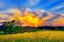 Beautiful evening sun shine sun light greenery nature blue sky stock photos
