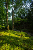 Beautiful evening sunshine in a forest Stock Images