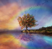 Beautiful evening. A view of a landscape in the evening with an amazing rainbow and a colouring sky Stock Photography