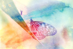 Beautiful exotic butterfly Royalty Free Stock Photography