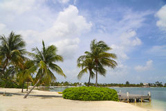 Beautiful exotic Caribbean beach with palm trees at Grand Cayman Stock Photos