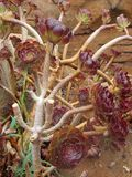 Beautiful exotic flower. After rain, Palma de Mallorca, Spain royalty free stock photos