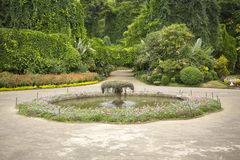 Beautiful exotic garden with water pool Stock Photos