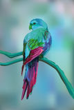 Beautiful exotic parrot on blurred background. Stock Photo