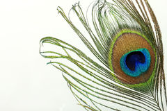Beautiful exotic peacock feather Stock Images