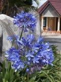 Beautiful exotic flower. Beautiful exotic plant, Sri Lanka stock photos