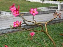 Beautiful exotic flower. Beautiful exotic plant, Sri Lanka stock image