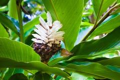 Beautiful exotic plant Stock Photography