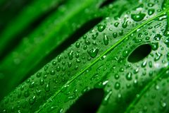 Beautiful exotic plants from jungle. Green leaves. Tropical wallpaper. stock photo