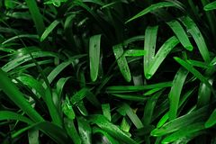 Beautiful exotic plants from jungle. Green leaves. Tropical wallpaper. royalty free stock photography