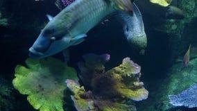 Beautiful exotic see fish in an aquarium. Underwater Scene. 3840x2160, 4k. Beautiful exotic see fish in an aquarium stock video