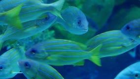 Beautiful an exotic see fish in an aquarium. Underwater Scene. 3840x2160. Beautiful exotic see fish in an aquarium stock video