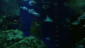 Beautiful exotic see fish in a dark aquarium. Underwater Scene. 3840x2160. Beautiful exotic see fish in an aquarium stock video footage