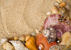 Beautiful exotic shell Stock Photo