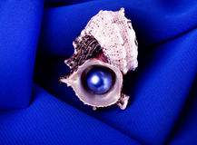 Beautiful exotic shell with pearl Stock Image
