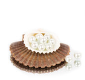 Beautiful exotic shell and pearls Stock Image
